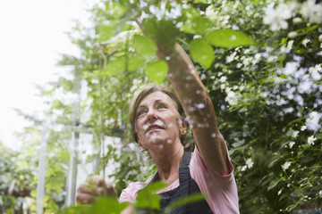 Senior female gardener analyzing plants seen through glass in yard