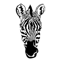 Illustration - black and white linear paint draw zebra illustration