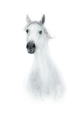 Portrait of white horse isolated on white background