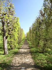 Allee im Klosterpark Brevsnovsky
