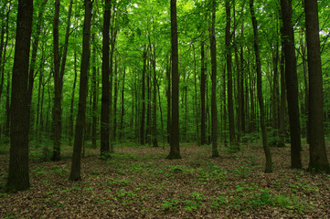 Papiers peints Forets Trees in green forest