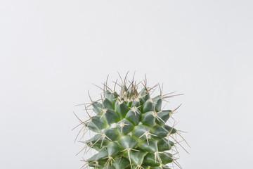 Photo sur Aluminium Cactus top of cactus plant