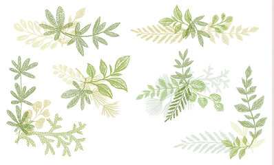 Green floral hand drawn decoration elements. Vector greenery branches isolated on white background. Botanical spring doodle wallpaper