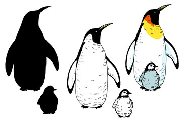 Vector penguin and baby set illustration. Hand drawn sketch of wild animal. Animals in the wild thematic drawing