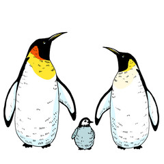 Vector penguins family with baby illustration. Hand drawn sketch of wild animal. Animals in the wild thematic drawing