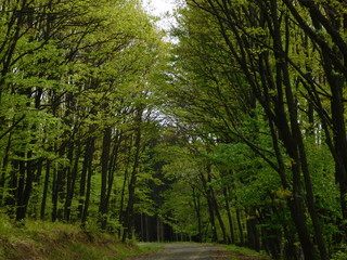 Fresh green forest trees