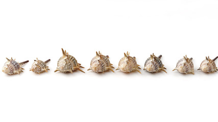 Sea shells isolated on white background. Straight line, row.