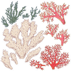 Colored Corals Set