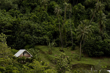 House nestled on hillside by trees, Tahiti, South Pacific