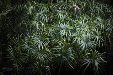 Abundance of palm tree fans, full frame