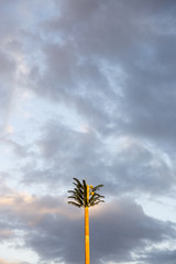 """Palm tree and sky, low angle view, Tahiti, South Pacific"