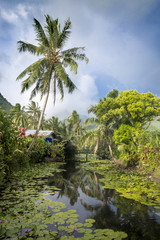 Plant leaves floating on river, palm tree and sunshine, Tahiti, South Pacific