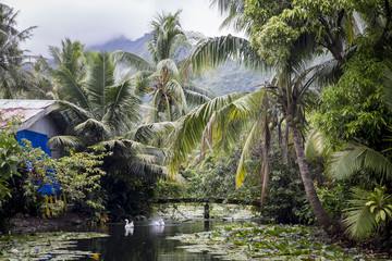 Cabin beside water, in rural setting, Tahiti, South Pacific
