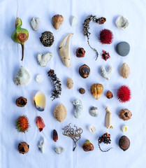 Assorted display of shells, pebbles and plants
