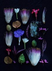 Assorted tropical flowers on black background