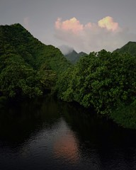 River in Tahiti with trees in the background