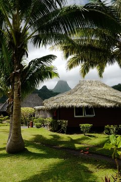 Single storey house with straw roof, palm trees beside house
