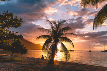 Beach, palm tree and sea at sunset, Tahiti, South Pacific