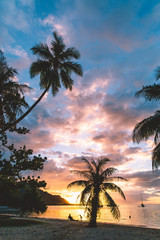 Beach, palm trees and sea at sunset, Mo'orea, South Pacific