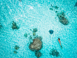Woman snorkelling with stingray, aerial view, Mo'orea, South Pacific