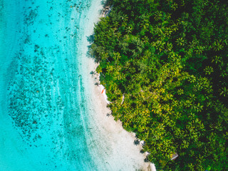 Sandy beach by palm trees, aerial view, Mo'orea, South Pacific
