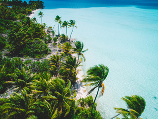 Palm trees and sea in sunshine, aerial view, Mo'orea, South Pacific