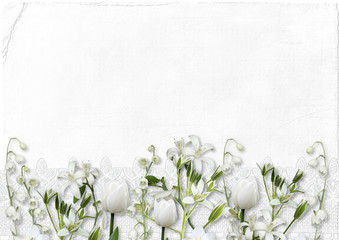 White spring flowers on a white background