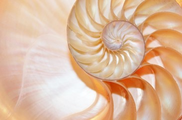 nautilus shell section background symmetry Fibonacci half cross section spiral golden ratio number sequence structure growth copy space stock photo photograph image picture