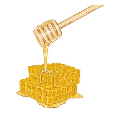 Hand drawn set of honeycomb with honey stick. Vector sketch