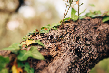 Wedding rings on a thread in the olive tree. Wedding in Montenegro