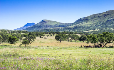 Game reserve landscape bushveld image on a hot day in South Africa