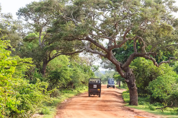 Landscape with road and SUVs in Yala National Park