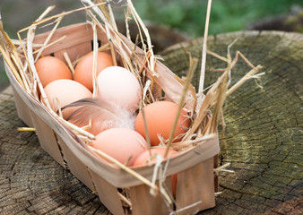 Closeup of egg in a basket. Top view of eggs in bowl. Brown eggs in wooden bowl. Chicken and Hen Egg basket