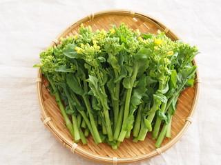食用菜の花