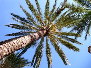 Palmenhimmel Ibiza