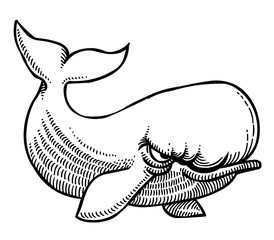 Cartoon image of angry whale. An artistic freehand picture.