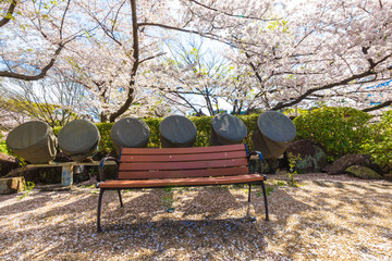 Park bench in sakura tree garden