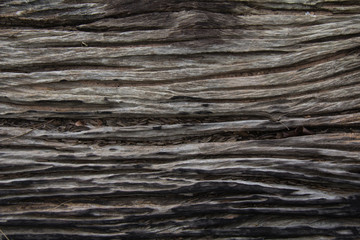 Wood plank brown texture background. Old wooden texture. Wood pattern Background
