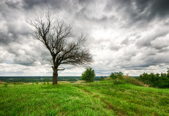 Old died tree on fresh green valley.  Dramatic sky
