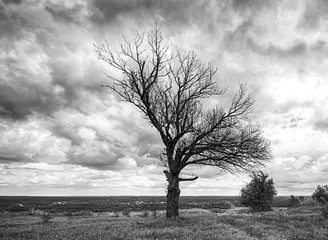 Old died tree black and white. Dramatic clouds
