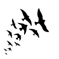 Vector silhouette flock of flying birds design on white background