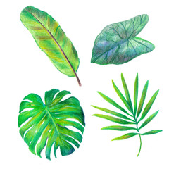 Green tropical leaves on white drawn of colorful pencils.Leaf of mons tera,banana palm,cala dium,areca.