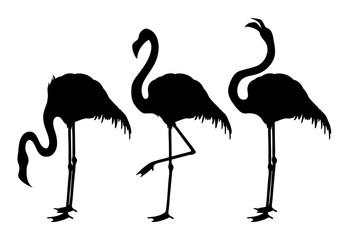 Cute graphic flamingo
