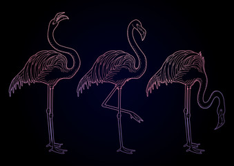 Cute graphic flamingo