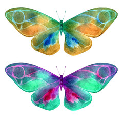 Watercolor illustration, set, image of colored transparent butterflies .
