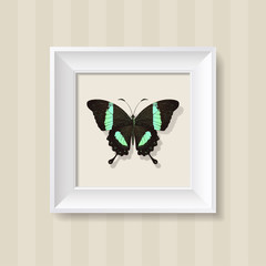 Green Butterfly in a White Frame