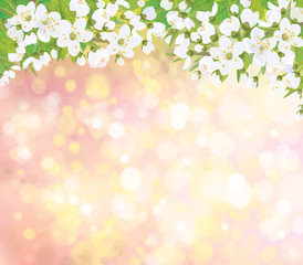 Vector blossoming branches of  tree, spring background.