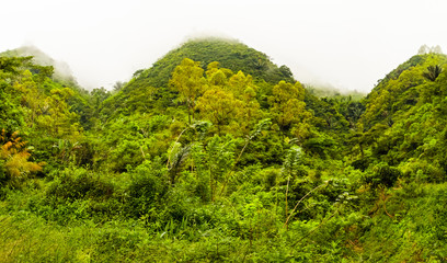 View of the green hills and jungle