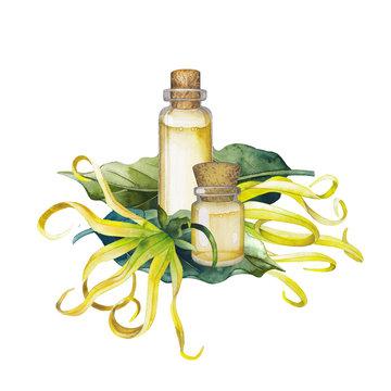 Watercolor ylang ylang oil