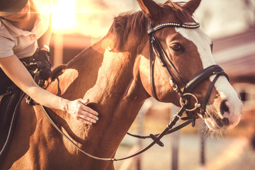 Hand of female rider rubbing horse